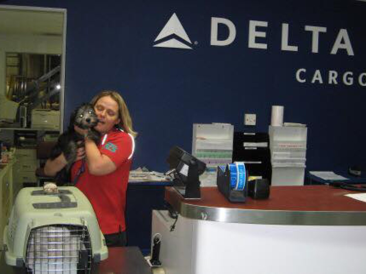 Croshka Siberians can ship your kitten to you on Delta Airlines