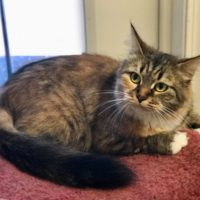 Available Miley Torbie F DOB 11/7/14