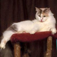 Available Retired Breeder Zoe DOB 5/24/13
